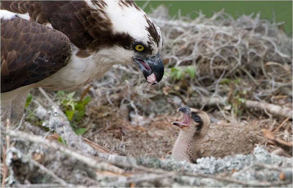 Index of /CHERTOK/CHERTOK CONTEST WINNERS/Audubon Contest